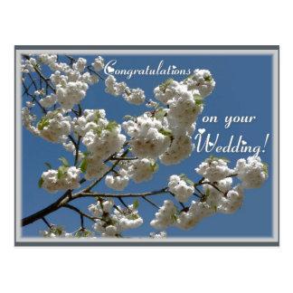 Fleurs blanches cartes postales