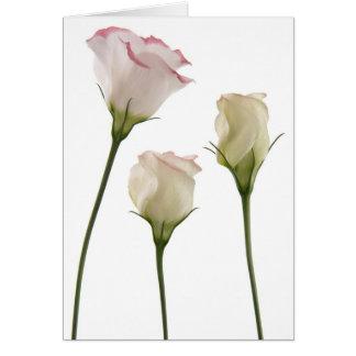 fleurs blanches de lisianthus, trio carte de vœux