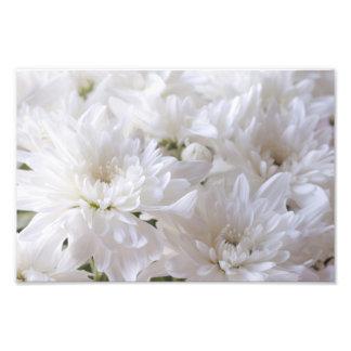 Fleurs blanches élégantes photos d'art