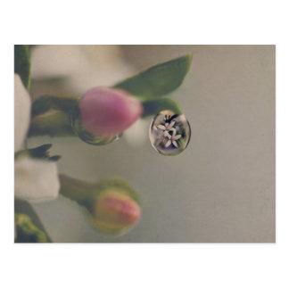 Fleurs blanches en carte postale de baisse de