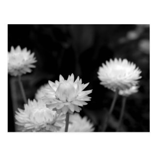 Fleurs blanches en noir et blanc carte postale
