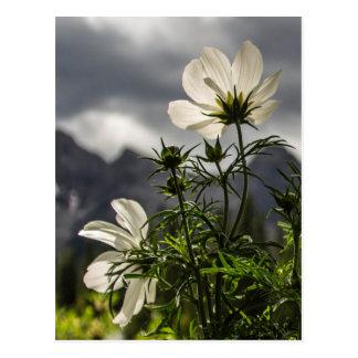 Fleurs blanches et montagnes carte postale