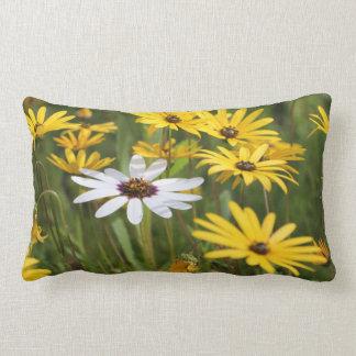 Fleurs blanches jaunes ensoleillées et coussin