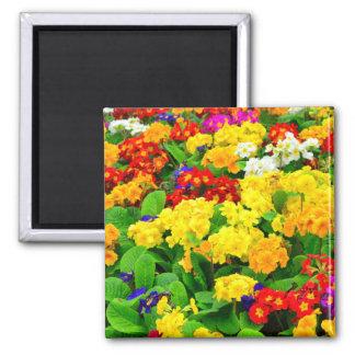 Fleurs blanches rouges, jaunes, pourpres colorées magnet carré