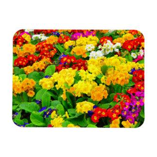 Fleurs blanches rouges, jaunes, pourpres colorées magnet rectangulaire avec photo