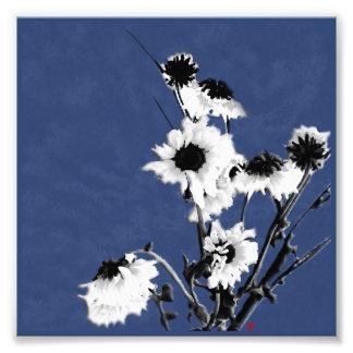 fleurs blanches sur le bleu impression photo
