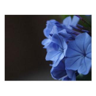Fleurs bleues cartes postales