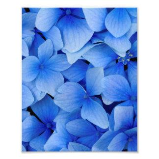 Fleurs bleues d'hortensia impression photo