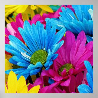 Fleurs bleues turquoises de marguerites de Gerber Posters