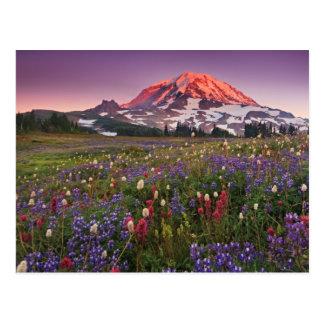 Fleurs colorées en parc national plus pluvieux carte postale
