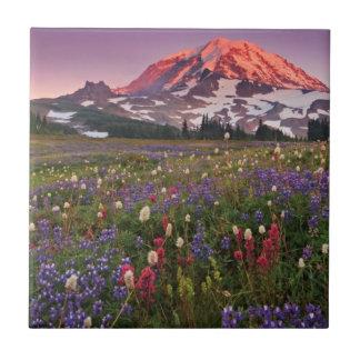 Fleurs colorées en parc national plus pluvieux petit carreau carré