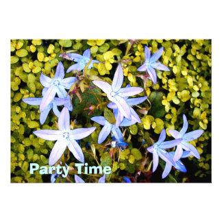 Fleurs d étoile bleue