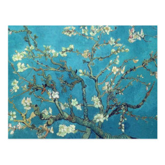 Fleurs d'amande carte postale