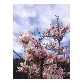 Fleurs d'arbre de tulipe. Soulangeana de magnolia Photographie