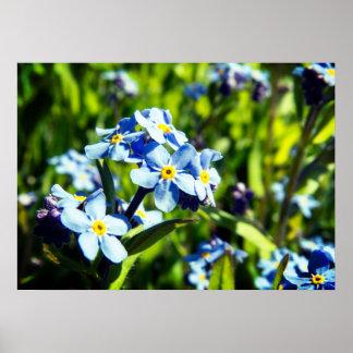 Fleurs de bleu de ressort poster