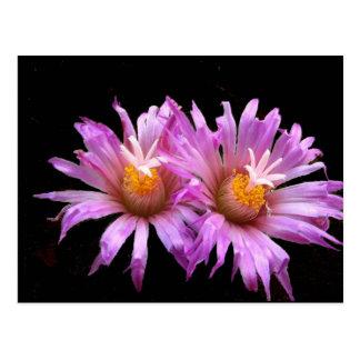 Fleurs de cactus sur la carte postale