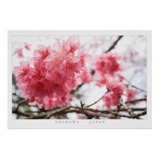 Fleurs de cerisier affiches