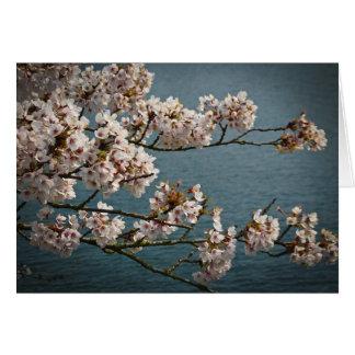Fleurs de cerisier cartes