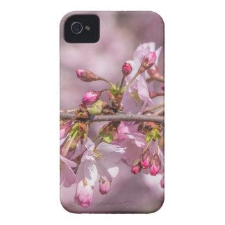 Fleurs de cerisier coque iPhone 4 Case-Mate
