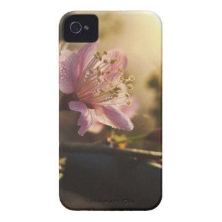 fleurs de cerisier coques iPhone 4