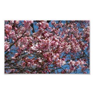 Fleurs de cerisier et ressort de ciel bleu floral impression photo