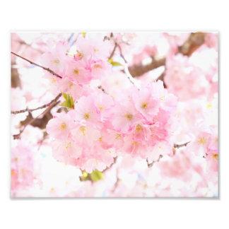 Fleurs de cerisier roses de Sakura d'arbre Impression Photo