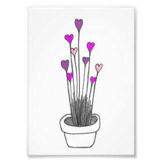 Fleurs de coeur photographie