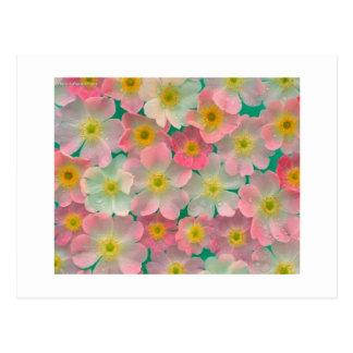 Fleurs de couleur en pastel cartes postales