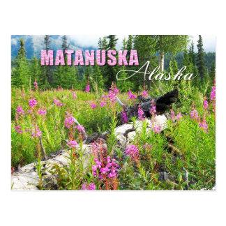 Fleurs de Fireweed en vallée de Matanuska, Alaska Cartes Postales