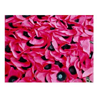 Fleurs de jour de pavot cartes postales
