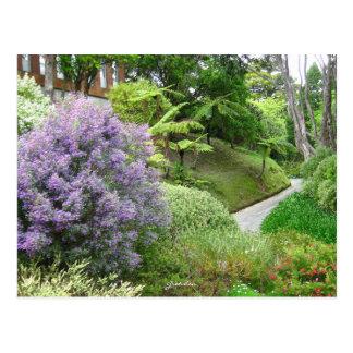 Fleurs de lavande en Nouvelle Zélande. Carte Postale