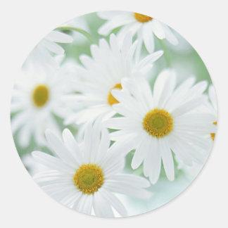 Fleurs de marguerite adhésif rond