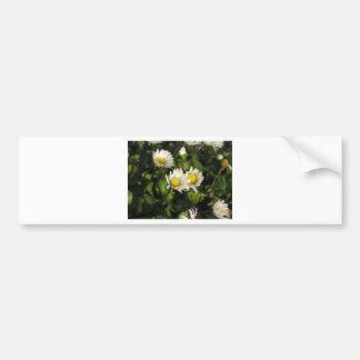 Fleurs de marguerite blanche sur l'arrière - plan autocollant pour voiture
