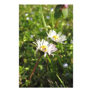 Fleurs de marguerite blanche sur l'arrière - plan motifs pour papier à lettre