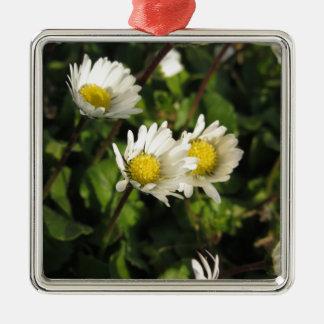 Fleurs de marguerite blanche sur l'arrière - plan ornement carré argenté