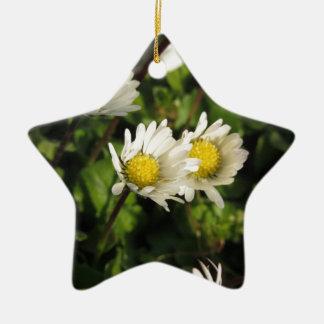 Fleurs de marguerite blanche sur l'arrière - plan ornement étoile en céramique