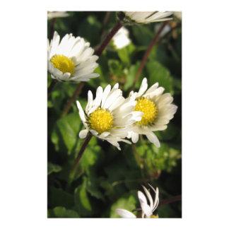 Fleurs de marguerite blanche sur l'arrière - plan papeterie