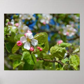 Fleurs de pommier poster