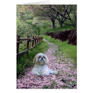 Fleurs de pourpre de carte de Shih Tzu