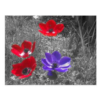 Fleurs de ressort cartes postales