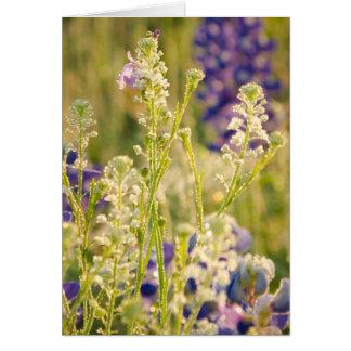 Fleurs de ressort dans le pays de colline du Texas Cartes