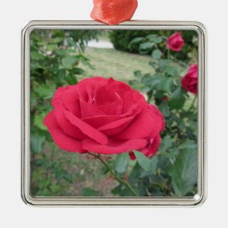 Fleurs de rose rouge avec des gouttelettes d'eau ornement carré argenté