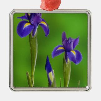 Fleurs d'iris ornement carré argenté