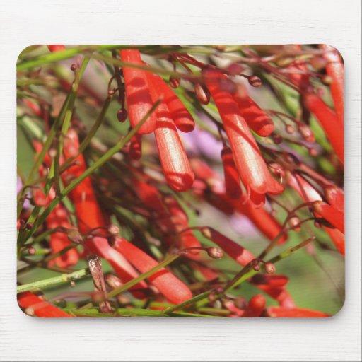 fleurs en forme de cloche rouges tapis de souris zazzle. Black Bedroom Furniture Sets. Home Design Ideas