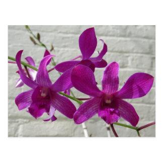 Fleurs exotiques violettes d'orchidée carte postale
