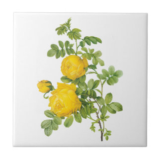 Fleurs florales vintages, roses jaunes par Redoute Petit Carreau Carré