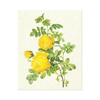 Fleurs florales vintages, roses jaunes par Redoute Toiles