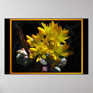 Fleurs jaunes de cactus posters