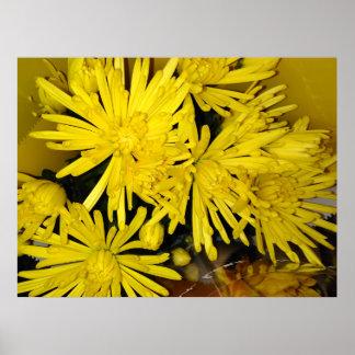 Fleurs jaunes de chrysanthème poster