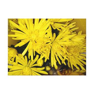 Fleurs jaunes de chrysanthème toile
